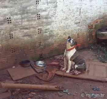 Polícia Militar atende caso de maus tratos a animais em Pato Branco - RBJ