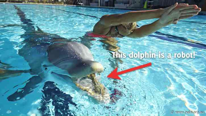 This Robotic Dolphin Could Mean the End of Marine Mammal Captivity
