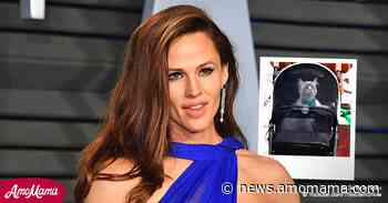 Why Jennifer Garner Takes Her Cat for Walk in a Stroller - AmoMama
