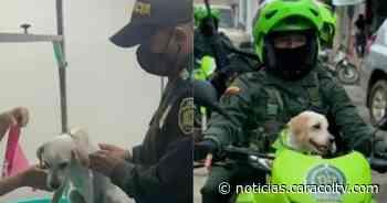 Perrita callejera fue rescatada por policías en Puerto Berrío y ahora patrulla con ellos las calles - Noticias Caracol