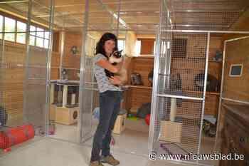 """Anderhalf jaar na brand kan Emmy weer katten opvangen: """"Eerst poezenopvang in orde gebracht, dan pas eigen woonst"""""""