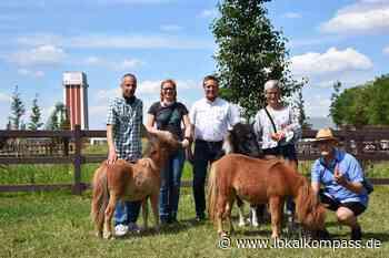 Kamp-Lintfort: Namenwettbewerb für Shetlandponys: Die Ponys der Landesgartenschau haben endlich Namen - Kamp-Lintfort - Lokalkompass.de