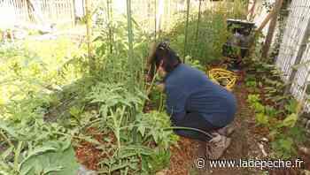 Tarascon-sur-Ariège. Les jardiniers s'activent dans les potagers de l'Ayroule - ladepeche.fr