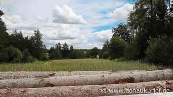 Altmannstein: Spielspaß unter dem Blätterdach - Dollnhof bei Thannhausen wird zum Standort für den Altmannsteiner Waldkindergarten - donaukurier.de