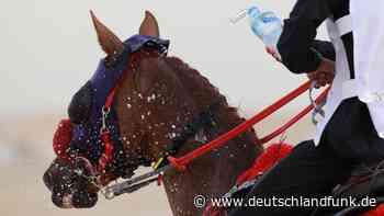 Pferdesport - Tierquälerei im großen Stil - Deutschlandfunk