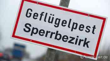 Rund 30 Tiere mussten getötet werden Geflügelgrippe bei Bretzfeld nachgewiesen | Heilbronn | SWR Aktuell Baden-Württemberg | SWR Aktuell - SWR