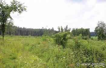 Wälder: Käferschäden weisen den Weg in die Zukunft - Passauer Neue Presse