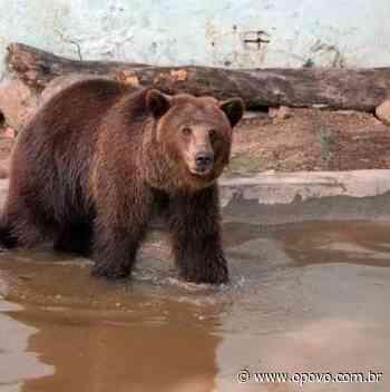 Ursos devem permanecer em zoológico de Canindé, conforme parecer da Semace - O POVO Online