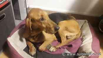 Bomporto, storia a lieto fine per il cane caduto in acqua - SulPanaro