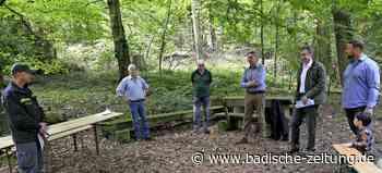 Droht Privatwald zu verwildern? - Staufen - Badische Zeitung