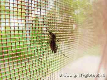 Grottaglie, questa notte disinfestazione insetti alati nel centro urbano - Grottaglie in rete