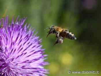 Mescolare unguenti in mezzo alla natura sul sentiero delle api con Martin Marti - Dolomiti.it