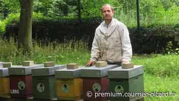 Des abeilles, nouvelles voisines des daims du parc d'Aramont à Verberie - Courrier Picard