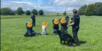 Four arrested after car crash in Rhos-y-Madoc - Wrexham.com