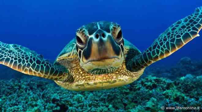 Torvaianica: tartaruga Caretta Caretta depone 90 uova sulla spiaggia - Il Faro Online - IlFaroOnline.it