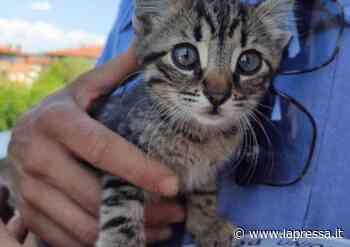Vignola, polizia locale salva gattino prigioniero in un capannone - La Pressa