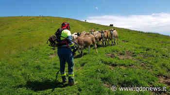 """""""Assalto"""" alla montagna di Valdobbiadene, sentieri sicuri grazie alla pulizia dei volontari Avab - Qdpnews.it - notizie online dell'Alta Marca Trevigiana"""