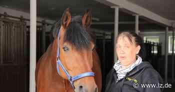 Vier Pferde sterben nach Herpesinfektion auf Reiterhof in Bad Salzuflen | Lokale Nachrichten aus Bad Salzuflen - Lippische Landes-Zeitung