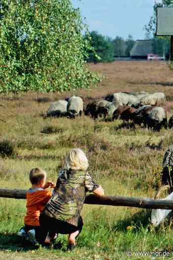 Wandern im Wendland: Nemitzer Heide und Gartower Forst - NDR.de