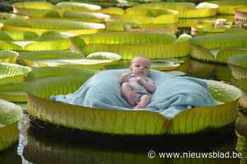 Aanschuiven voor fotoshoot met baby op blad van reuzenwaterlelie