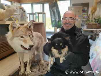 Wolfsausstellung in Zaberfeld lockt Gäste: Im Naturparkzentrum wird tierisch was geboten - Pforzheimer Zeitung