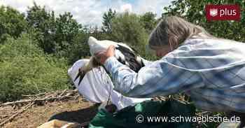 Nach dem Familienstreit gibt es eine Taufe im Storchennest - Schwäbische