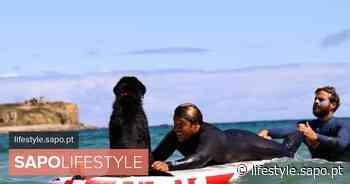 Maravilha, o cão de João Manzarra que já faz surf sozinho - SAPO Lifestyle