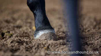 More equestrian sports outline restart plans: sport in Wales and Scotland remains limited - Horse & Hound