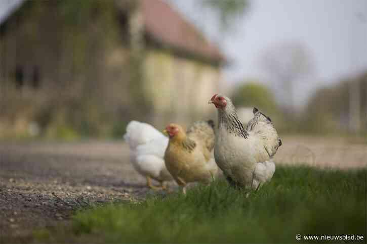 """Voorzitter zorgboerderij 'De Ark Van Pollare' maakt misbruik van oudere vrouw: """"Ze had een enorme voorliefde voor haar kippen"""""""