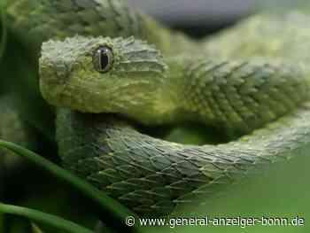 Spinnen, Schlangen und Co.: Landesregierung will den Kauf giftiger Tiere verbieten - General-Anzeiger
