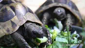 Schlangen und Schildkröten: Hamburger setzen weniger exotische Tiere aus | shz.de - shz.de
