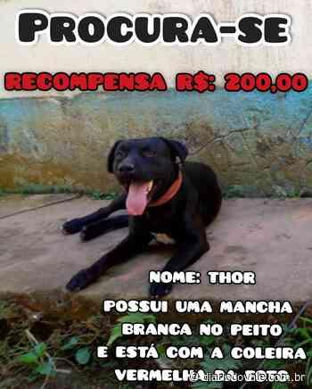 Internauta oferece recompensa por cachorro desaparecido em Pinheiral - Diario do Vale