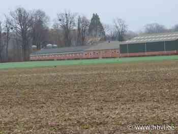 Buren boos: toch weer aanvraag voor stal met 90.000 kippen - Het Belang van Limburg