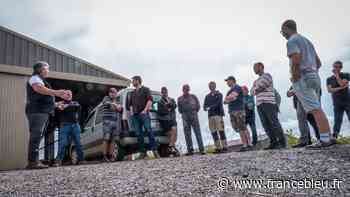 Les sangliers font des ravages sur les récoltes à Fougerolles - France Bleu