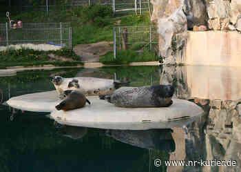 Endlich wieder Führungen im Zoo Neuwied - NR-Kurier - Internetzeitung für den Kreis Neuwied