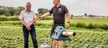 Zuurbier: 'Ik teel geen groente om ganzen te voeren' - NieuweOogst.nu