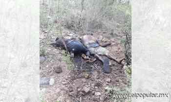 Hallan cuerpos con impactos de bala en la cabeza en Ajalpan - El Popular