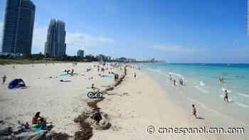 Covid-19 repunta en Florida: van más de 106.000 casos - CNN