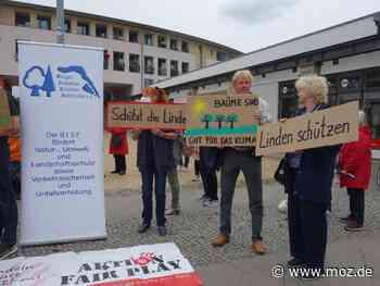 Demonstration: Für Erhalt der Linden an der Spandauer Straße in Falkensee - Märkische Onlinezeitung