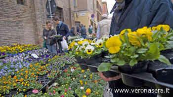 """Sul lago di Garda un weekend tra colori e profumi con """"Malcesine in fiore"""" - VeronaSera"""