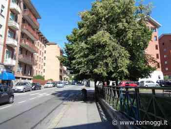 """Natura selvaggia in via Pianezza: l'albero """"ingloba"""" anche la fermata del bus - TorinOggi.it"""