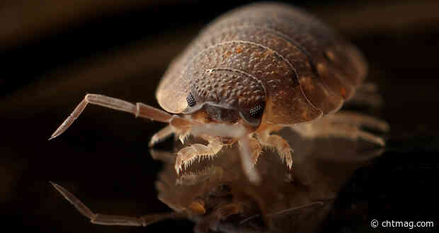 Hotel and B&B guests should brace themselves forbed bugs say experts