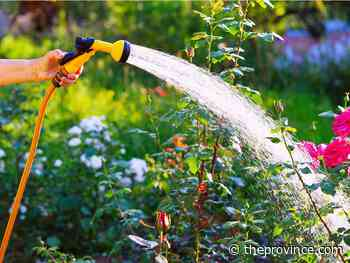 Water-thrifty ways to ensure good plant growth