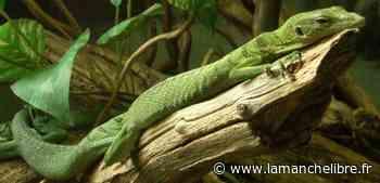 Avranches. Près de 800 espèces au parc d'Alligator Bay - la Manche Libre