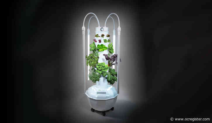 Grow beautiful plants in tight spaces using aeroponics