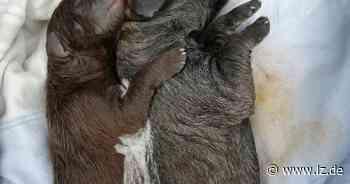 Spaziergänger finden Sack mit toten Hundewelpen in Blomberg | Lokale Nachrichten aus Blomberg - Lippische Landes-Zeitung