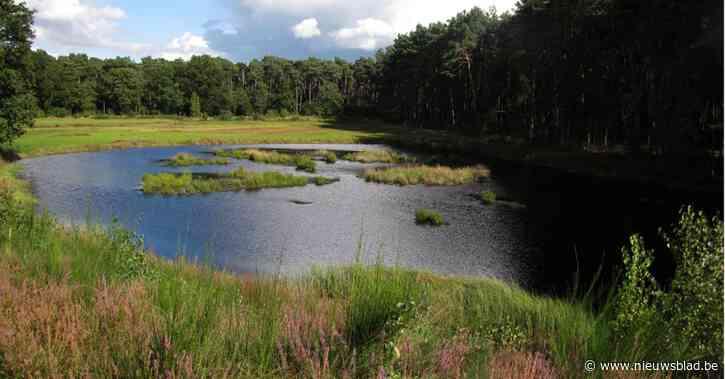 Natuurpunt wil groene corridors tussen Kempense natuurgebieden Vuilvoort en Lovenhoek