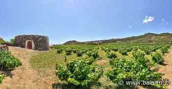 Fra le meraviglie del Giardino Pantesco: una visita guidata nella Pantelleria dei sogni - Balarm.it