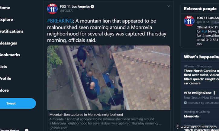 Mountain lion found under Monrovia home