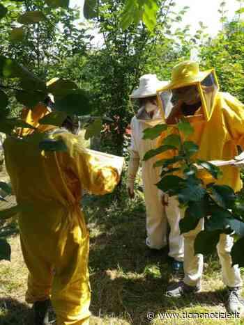 """Prodotto il primo """"Mielurbano"""" di Lainate. sarà donato ai volontari dell'emergenza Covid - Ticino Notizie"""